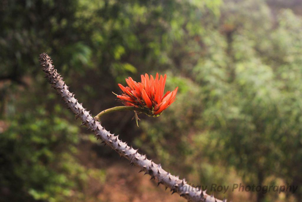 Trip to Harihareshwar